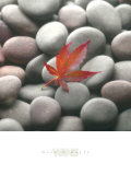 Leaf on Stone Prints by Glen & Gayle Wans