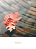 Leaves in Stream Poster by Glen & Gayle Wans