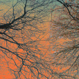 Sunset Forest III Prints by M.J. Lew
