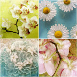 Floral Collage Photographic Print by Alaya Gadeh