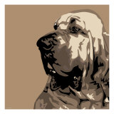 Bloodhound Premium Giclee Print by Emily Burrowes