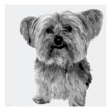 Yorkie Giclee Print by Emily Burrowes