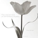 Tulip Beauty Affiche par Deborah Schenck