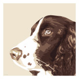 Springer Spaniel Lmina gicle por Emily Burrowes