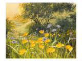 Golden Sunset Giclee-tryk i høj kvalitet af Mary Dipnall