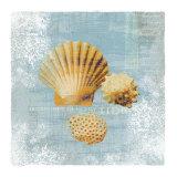 Tidal Treasures Prints