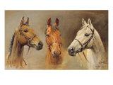 Tre hester Premium Giclee-trykk av Susan Crawford