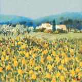 Lemon Grove, Tuscany Giclee Print by Hazel Barker