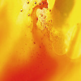 Yellow and Orange Swirling Abstract, c. 2008 Premium Giclee Print by Pier Mahieu