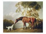 Bay Horse and White Dog Giclee-tryk i høj kvalitet af George Stubbs