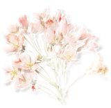 Prunus, 2006 Premium Giclee Print by Anne Montiel