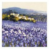 Champs D'Iris, Provence Premium Giclee-trykk av Hazel Barker