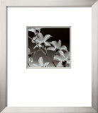 Orchid Denrobium Prints by Steven N. Meyers