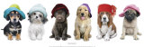 Hat Hounds Print by Keith Kimberlin