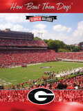 University of Georgia-Stadium Shot Photo