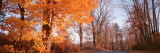 Maple Tree in Autumn, Litchfield Hills, Connecticut, USA Photographic Print by  Panoramic Images