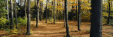 Chestnut Ridge Park Orchard Park Ny, USA Photographic Print by  Panoramic Images