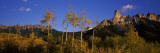 Aspen Trees in a Forest, Chimney Rock, Owl Creek Pass, Colorado, USA Photographic Print by  Panoramic Images