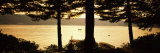 Trees at the Lakeside, Oquaga Lake, Deposit, Broome County, New York State, USA Photographic Print by  Panoramic Images