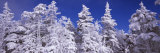 Low Angle View of Snow Covered Trees, Stratton Mountain Resort, Stratton, Windham County Photographic Print by  Panoramic Images