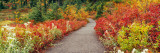 Flowers on Both Sides of a Path, Washington State, USA Photographic Print by  Panoramic Images