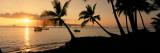 Silhouette of Palm Trees at Dusk, Lahaina, Maui, Hawaii, USA Reprodukcja zdjęcia autor Panoramic Images