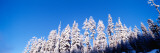 Oregon, Pine Trees, Winter Photographic Print by  Panoramic Images