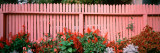 Close-up of Flowers Growing Near a Fence Photographic Print by  Panoramic Images