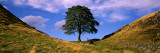 Lone Tree Hadrian's Wall Northumberland England Photographic Print by  Panoramic Images