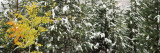 Trees Covered with Snow, Grand Teton National Park, Wyoming, USA Photographic Print by  Panoramic Images