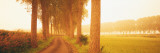 Rural Tree Lined Road Belgium Photographic Print by  Panoramic Images