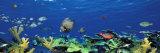 School of Fish Swimming in the Sea, Digital Composite Reprodukcja zdjęcia autor Panoramic Images