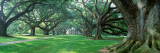 Panoramic Images - Louisiana, New Orleans, Oak Alley Plantation, Plantation Home Through Alley of Oak Trees Fotografická reprodukce