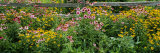 Flowers in a Garden Photographic Print by  Panoramic Images