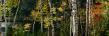 New York, Adirondacks, Autumn at Chapel Pond Photographic Print by  Panoramic Images