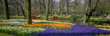 Keukenhof Garden Lisse the Netherlands Photographic Print by  Panoramic Images