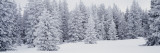 Fresh Snow on Pine Trees Taos County, NM Fotografie-Druck von  Panoramic Images