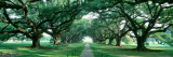 Louisiana, New Orleans, Brick Path Through Alley of Oak Trees Fotografiskt tryck av Panoramic Images,