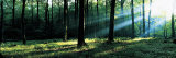 Forest Germany Photographic Print by  Panoramic Images