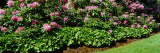 Flowers in a Garden, Rhododendron, Michigan, USA Photographic Print by  Panoramic Images