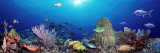 School of Fish Swimming in the Sea Photographic Print by  Panoramic Images