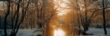 River Flowing Through a Forest Fotografie-Druck von  Panoramic Images