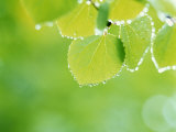 Selective Focus Close Up of Green Leaves Hanging from Tree Fotografie-Druck