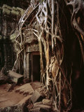 Banyan Tree Growing in a Temple, Cambodia Photographic Print