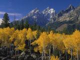 Wyoming, Grand Teton National Park Photographic Print