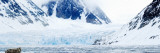 Bearded Seal Resting on an Ice Floe, Spitsbergen, Svalbard Islands, Norway Stampa fotografica di Panoramic Images,