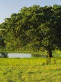 Oak Tree in a Field, Tucson, San Rafael Valley, Santa Cruz County, Arizona, USA Photographic Print