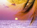 Stylized Tropical Scene with Violet Sea, Pink Sky, Setting Sun and Palm Fronds Photographic Print