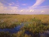 Florida, Everglades National Park Photographic Print