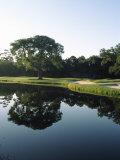 Reflection of Trees in a Lake, Kiawah Island Golf Resort, Kiawah Island, Charleston County Fotografie-Druck